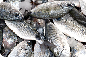 Melanouri (Saddled bream)