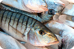 The Greek Mourmoura (Striped Sea bream fish - Murmurer fish)