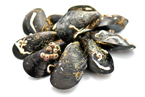 The Greek Mussels